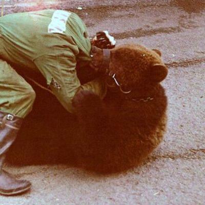 Reino Koivuniemi painii karhun kanssa
