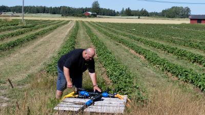 En man vid en droppbevattningsstation intill en grön jordgubbsåker.