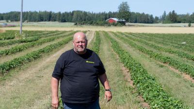 En man står i ett grönskande jordgubbsland.