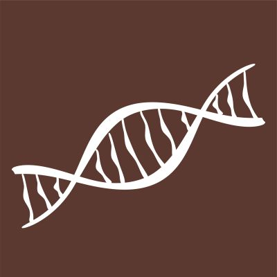Piirroskuva DNA:n rakenteesta.