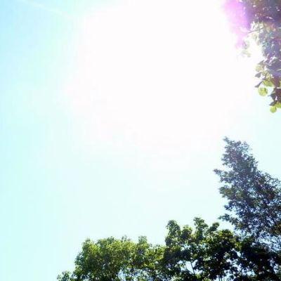 Aurinko paistaa puiden lomitse.
