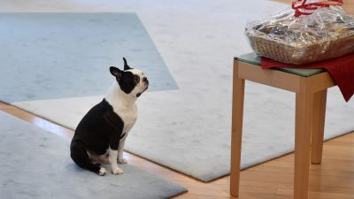 presidentens hund Lennu är död