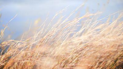 Gräs som böjer sig i vinden