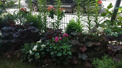 Kuvassa on Punavuoressa, Helsingissä asuvan Margot Leinosen kerrostalon taloyhtiön pihaan perustama puutarha.