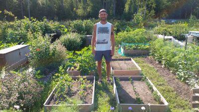 Palstalla viljelevä Juho Liesmäki seisoo kasvatuslaatikoidensa vieressä. Kasvatuslaatikoissa kasvaa hernettä, porkkanaa, kesäkurpitsaa, salaattia ja sipulia.