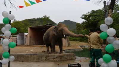 Avskedsceremoni för Kaavan på Marghazar Zoo i Islamabad, Pakistan 23.11.2020,  före avfärden till Kambodja