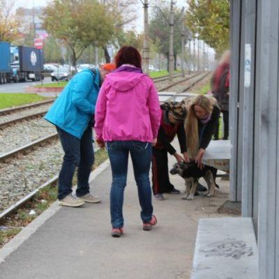 RRescueyhdistys Kulkurit ry:n kolme naista löytävät koiran bussipysäkiltä Romaniassa