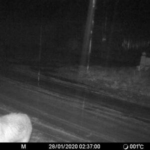 En svartvit bild tagen med en viltkamera, i ett hörn ser man ett djur.