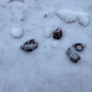 Koirankakkaa lumisessa maassa