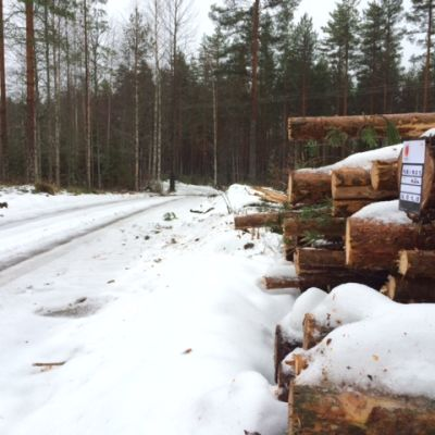 Puupino metsäautotien varrella.