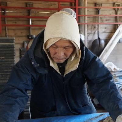 Äldre man behandlar ris i Japan