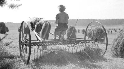 Nainen haravakonetta ajamassa (1.7.1941).