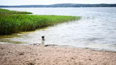 Pieni lapsi veden rajassa uimarannalla.