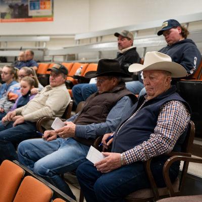 Publiken på en boskapsauktion i Great Falls, Montana.