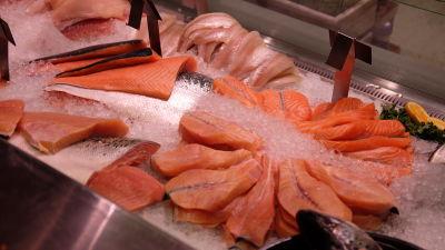 En fiskdisk med laxfiléer och is.