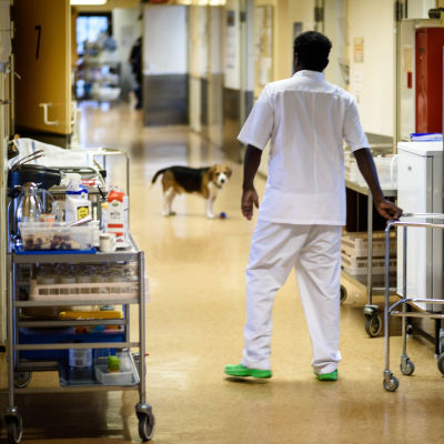 Skötare i sjukhuskorridor med besökande hund.