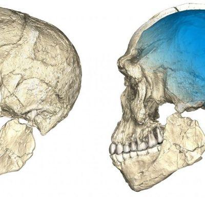 Kaksi kuvaa pääkallosta eri kulmista.