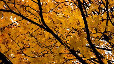bild på ett lövträd