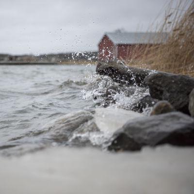 Högt vattenstånd i den österbottniska skärgården. I bakgrunden syns ett rödmålat båthus.
