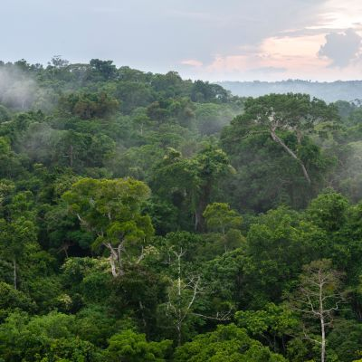 Regnskog i Amazonas. Pará, Brasilien