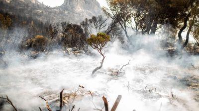 En eldhärjad skog i Grekland.