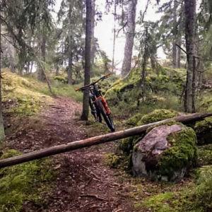Stor stock som ligger farligt över en brant skogsstig.MTB