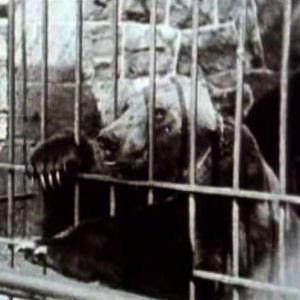 Karhu ohjelmassa Korkeasaari 100 vuotta (1989)