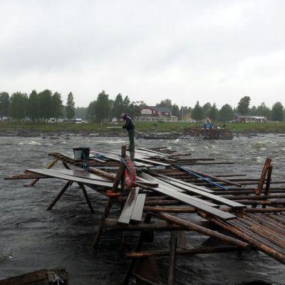 Siian lippousta elokuussa 2013 Tornion Kukkolankoskella.