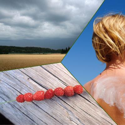 Bildmontage som representerar sommaren.