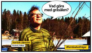 Karl-Erik Liljeström tittar upp mot himlen och fåglarna på sin gård.