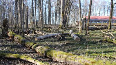 murkna trädstammar ligger på marken