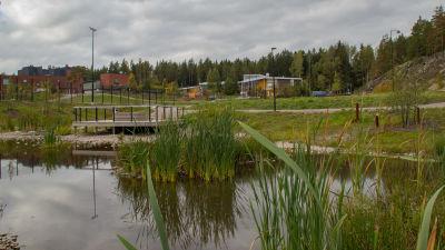 En liten sjö där det växer vass och kaveldun. Söderkulla skola i bakgrunden.