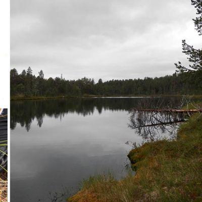 Kollaasikuvassa Rhynchotalona latens vesikirpun kotijärvi, pohjasedimenttinäyte ja mikroskooppikuva kirpusta.