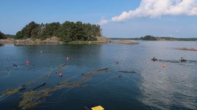 Bild av två dykare som sommar på ytan längs med slangar och flöten.