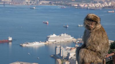 En apa har klättrat upp på ett räcke vid en utsiktsplats med utsikt över Gibraltarbukten. Arkivbild från juli 2017.