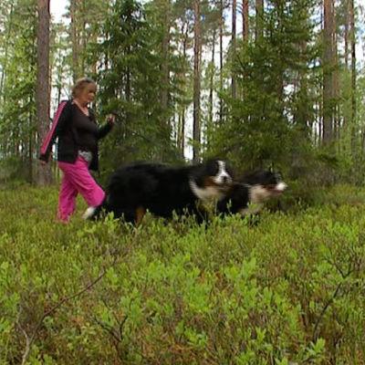 Liisa Syrjä taluttaa koiriaan metsässä.