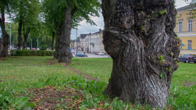 Trädstam i Monumentparken i Lovisa.