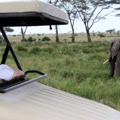 Saksan liittopresidentti Joachim Gauck kurkistelee auton katoksen alta ruohikossa kävelevää norsua.