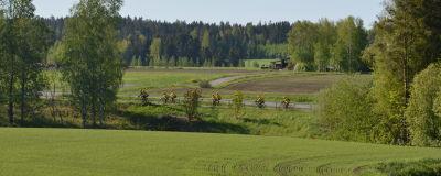 En grupp cyklister i gula dräkter cyklar på en landsväg med gröna fält omkring.