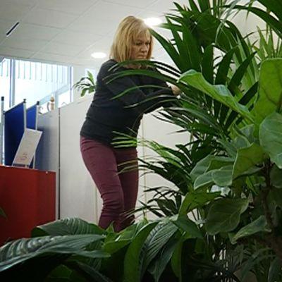 Arja Saloranta vihersisustaja Lahti
