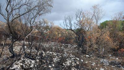 Bränt landskap på Sicilien september 2021.