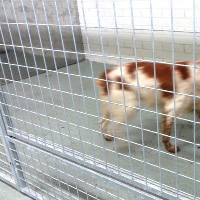 Tornion Juntinkoirahoitolassa koiria häkissä