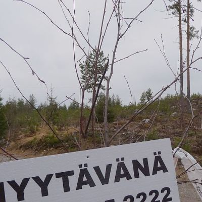 Metsäpalsta myytävänä