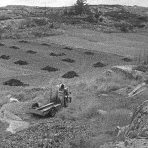 Maanviljelijä työn touhussa saaristossa.