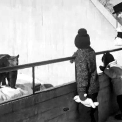 Björnar på Högholmen, 1963