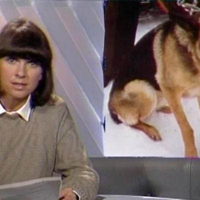 Regionalen om djurskydd, 1984