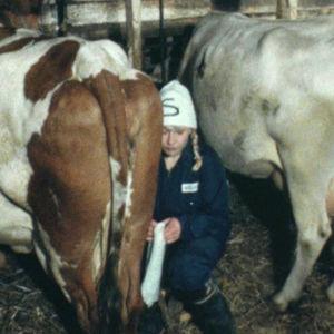 Kvinna mjölkar ko, Yle 1984