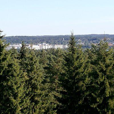 Puiden takaa näkyy kaupunki ja järvi.