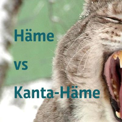 Häme vs Kanta-Häme -teksti haukottelevan ilveksen kuvassa