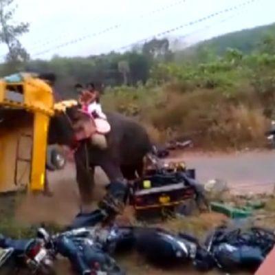 Uutisvideot: Norsu riehaantui ja heitteli ajoneuvoja Intiassa
